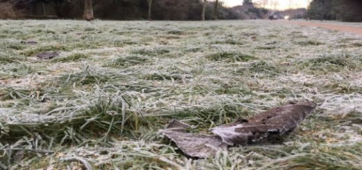 A frozen leaf on frozen grass.